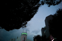 LEICA M(Typ262) + Carl Zeiss T* Biogon 28mm F2.8 ZM Harajuku , Tokyo – 2018/11/10