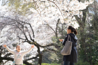 Fujifilm X-T3 + FUJINON LENS XF80mmF2.8 R LM OIS WR Macro Shinjuku-Gyoen , Tokyo – 2019/04/05