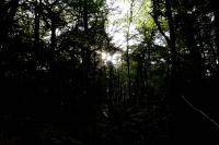 Fujifilm X-T3 + FUJINON LENS XF16-55mm F2.8 R LM WR Aokigahara Forest , Yamanashi – 2019/09/28